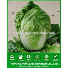 NCC04 Xiaohu pouco repolho chinês, sementes de pak choi, tipos de repolho
