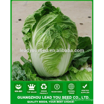 NCC04 Xiaohu little chinese cabbage,pak choi seeds,cabbage types