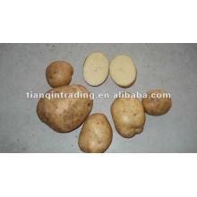 Shandong frische Kartoffel Preis Fabrik