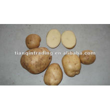 shandong fábrica de preços de batata fresca
