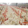 Geflügelstall mit automatischer Hühnerlandwirtschaft