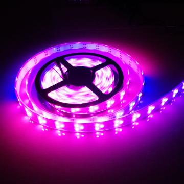 Waterproof RGB Flexible SMD Led Strip Light