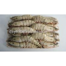 Whole Round Tiger Shrimp