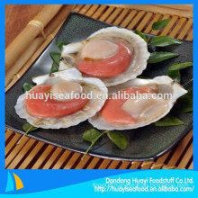 frozen live scallop in half shell scallop from Chinese market