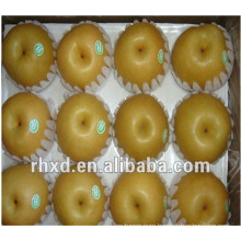 Popular sale shandong pear export to Sri Lanka