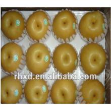 Популярные продажи экспортной груша шаньдуна в Шри-Ланку