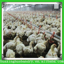 Reasonable design system for broiler chicken/broiler chicken breeding machine