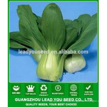 NPK04 Haia F1 melhor pak choi sementes fábrica chinês sementes de hortaliças shanghaiqing
