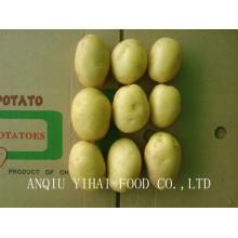 2016 Nouvelle pomme de terre fraiche à vendre