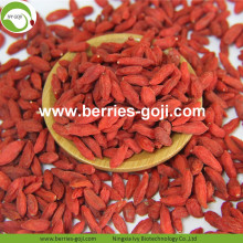 High Qualty Sale Nutrition Food Gemeenschappelijke Goji-bessen
