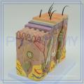 ПНТ-0552 салоне красоты используют модель человеческой кожи