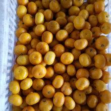 Gelbe süße Baby-Mandarine mit Kartonverpackung