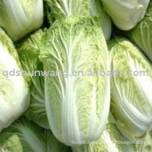 2011 fresh chinese long cabbage