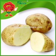Hot sale Chinese fresh russet potato Factory Supply Potatoes