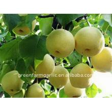 Chinese fresh Ya pear in Cartons