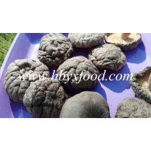 Getrockneter glatter Shiitake-Pilz mit gutem Preis