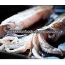 frozen squid product (Loligo Japonica)
