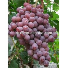 2013 китайский вкусный сладкий Красный Глобус винограда/ красного шара свежий красный виноград для продажи