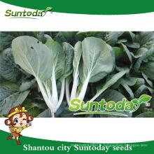 Suntoday légumes hs code légume héritage moissonneuse pakchoy améliorer fruithigh fois semis de fruits à vendre des graines (37001)