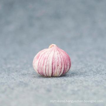 High quality fresh single clove garlic