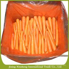 Chinês, fresco, cenoura