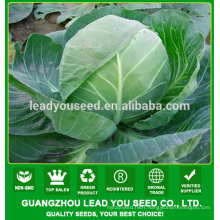 MC53 Bilan Bark Green hybrid cabbage seeds for sales