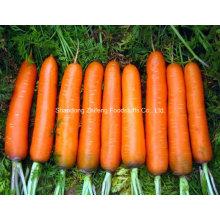 100г и до нового урожая моркови столовой