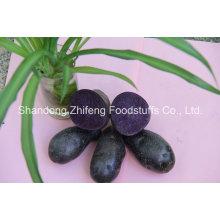 Chinese Fresh Purple Yam for Exporting
