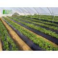 Feito na personalização de China bem-vindo Alta transparência plástico oversized rolo filme stretch biodegradação