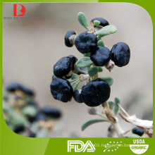 wholesale China high quality black goji/Chinese black wolfberry/goji berry black