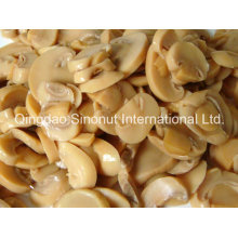 Canned Mushroom in Water (184G, 400g, 800g, A9, A10 HACCP, ISO, BRC)