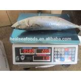 Sea Frozen Mackerel (frozen on boat) 300-500g