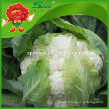 Chou-fleur frais