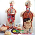TUNK ANATOMY 12013 Plastic 27 Parts 85cm Open Back Dual-Sex Anatomical Medical Torso Models