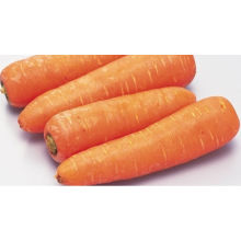 Fresh carrot price in China