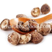 Thick Tea Flower Shiitake Mushroom From China