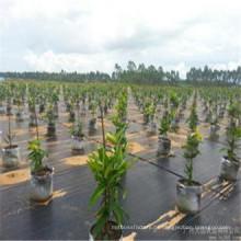 China Nichtgewebtes Garten-Vlies-Gewebe