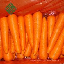 Cenoura de alta qualidade na cenoura chinesa china cenoura fresca