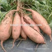 Potato Product Type and Potato Type sweet potato