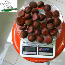 wholesale fresh chestnut