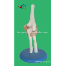 Life-size Plastic human elbow joint model