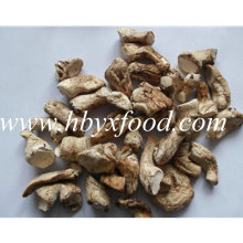 Tige de champignons naturels naturels naturels secs et hautement nutritifs