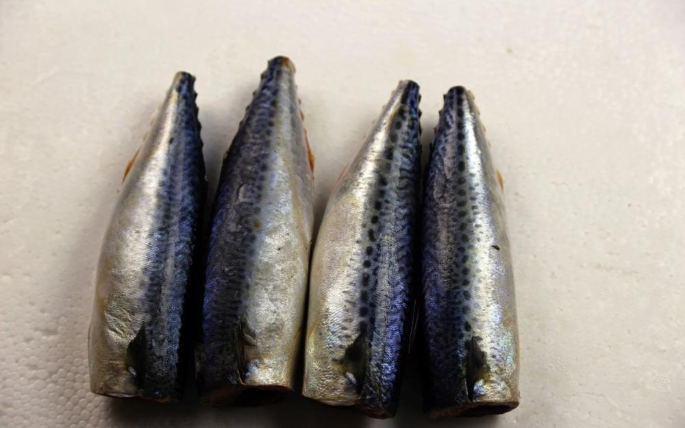 Fresh Sea Frozen Mackerel HGT