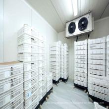 Refrigeración de almacenamiento de baja temperatura Salas de congelación