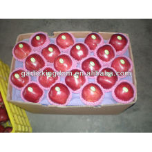 Red leckerer Apfel / Huaniu Apfel / Rote Weihnachtsäpfel