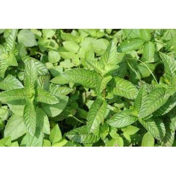 100% natürliches Kraut-Gras-Gelee-Extrakt 10: 1