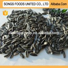 Graines de tournesol alimentaires sèches 5009