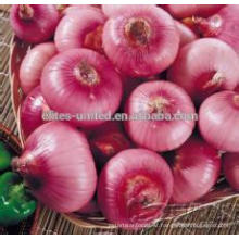 Red onion price in China