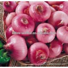 Level of Onion Price Ton