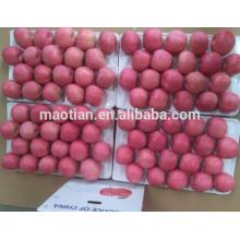 Estilo fresco e tipo de produto Pome Fruit maçãs frescas
